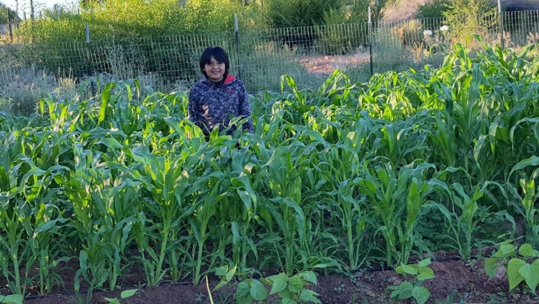 Rico Ivins, Cibecue Branch, stands in the corn patch of his grandparents' garden, one of eight gardens started this year under the Church-sponsored family garden project. Photo courtesy of Kay Jex.