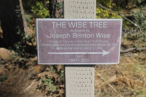 "A bronze plaque honoring Joe Wise has been placed on Camp LoMia's Friendship Loop, near a 300-year-old tree dubbed ""Wise Tree"" in his honor. Photo by: Kaylee Petrie"