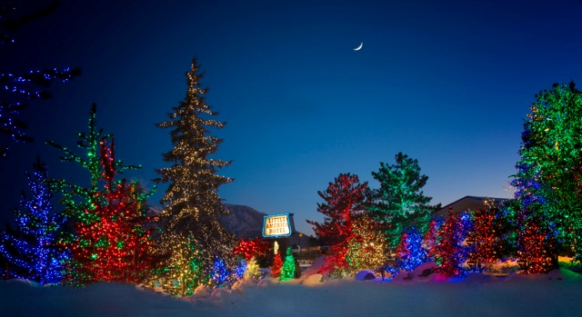 Lit Christmas Trees Photo by: The North Pole Experience